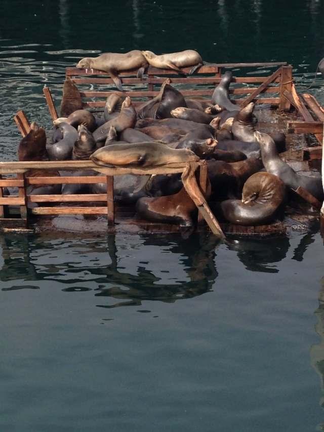sea lions on a platform