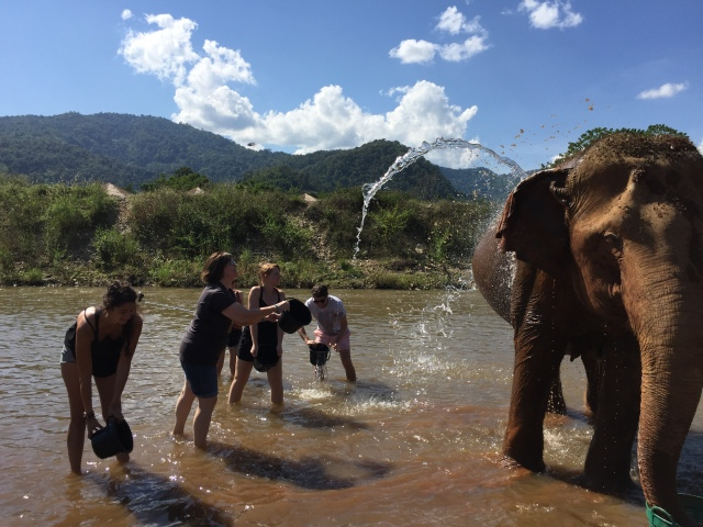 Bathing the elephants at Elephant Nature Park.